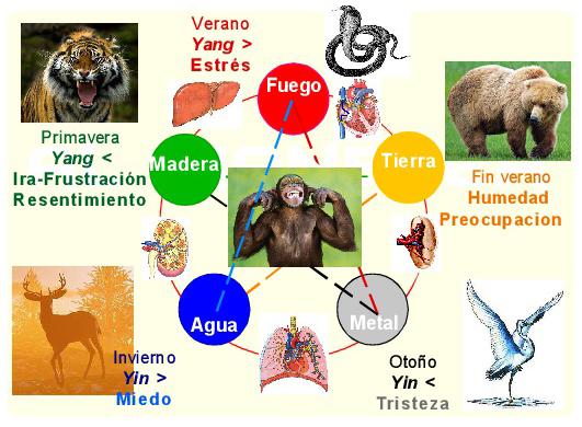 WU QIN XIN qi gong de los animales