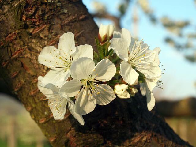 Salud por las estaciones: Madera-Primavera