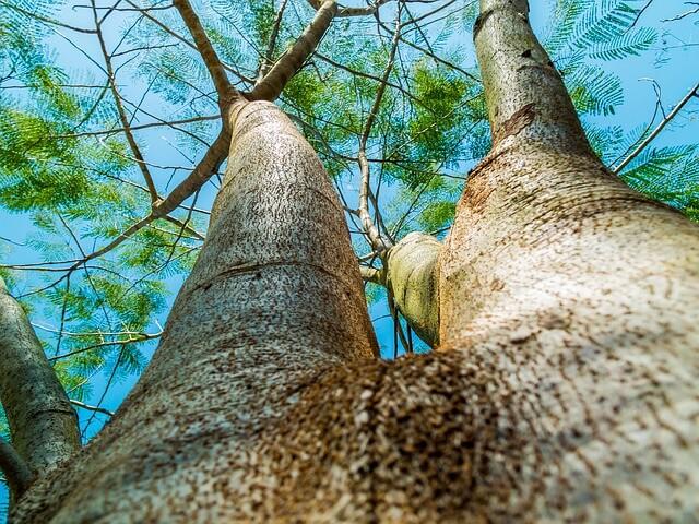 Ecologistas en acción: un andaluz, un arbol.