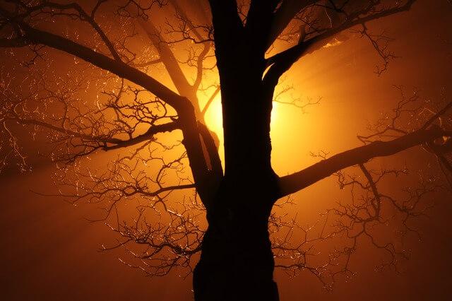 Milarepa: de la oscuridad a la luz