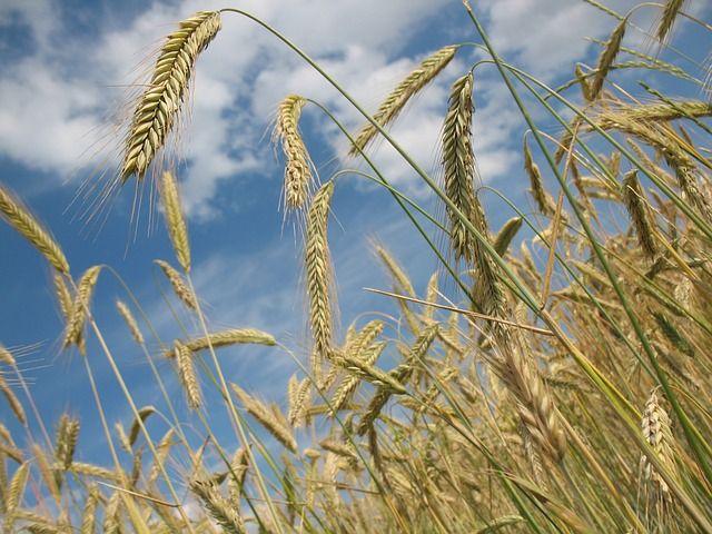 Parábolas sobre semillas