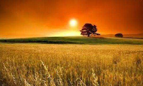 Al manecer centro holístico espiritualidad parabola semillas