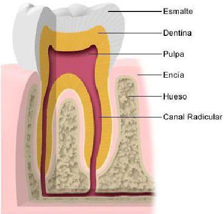 Al manecer centro tecnicas holisticas sevilla odontologia biodescodificación