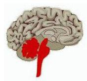 Alquimia interior Cerebro reptil Almanecer tecnicas holisticas Sevilla