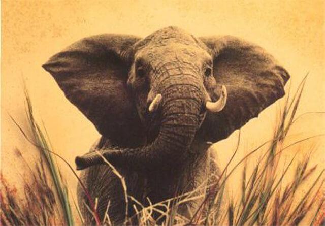 Cuentos Para Pensar Elefante Intento Almanecer Toma Conciencia Ya