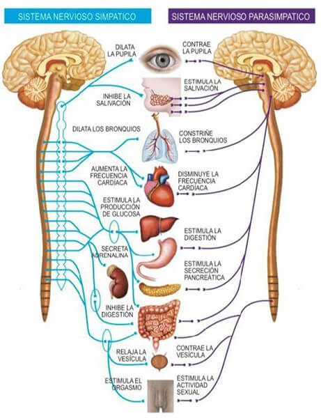 las cinco leyes doctor hamer medicina germanica biopsiconeuroemocion almanecer toma conciencia sevilla