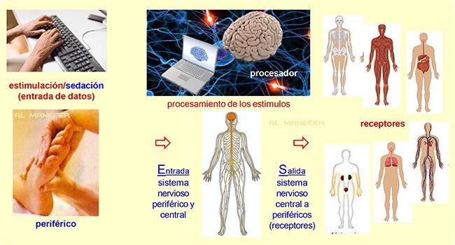 reflexologia podal bioenergetica bio energetica sevilla